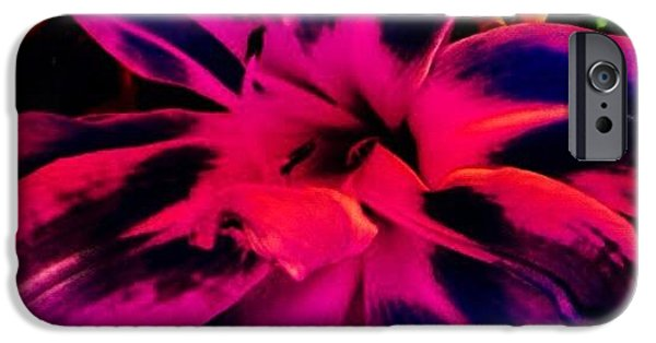 Bright iPhone 6 Case - Flower by Katie Williams