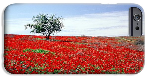 A Tree In A Red Sea IPhone 6 Case by Dubi Roman
