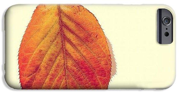 Orange iPhone 6 Case - Autumn by Nic Squirrell