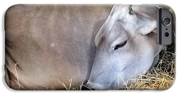 Ohio iPhone 6 Case - Beautiful Brown Swiss by Natasha Marco