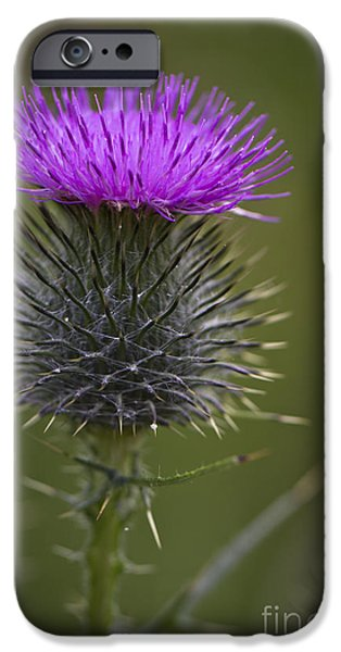Blooming Thistle IPhone 6 Case