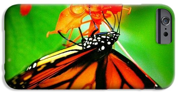 Colorful iPhone 6 Case - #butterfly #pretty #colorful by Mandy Shupp