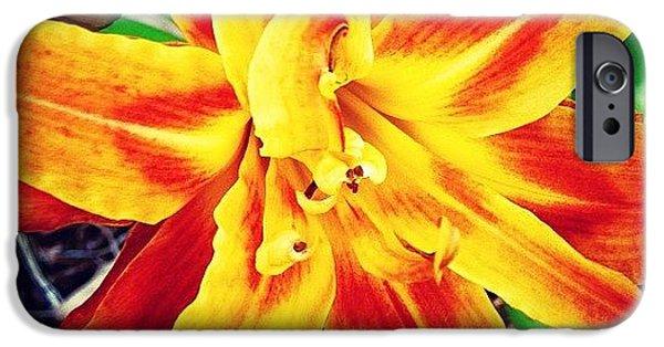 Summer iPhone 6 Case - Flower by Katie Williams