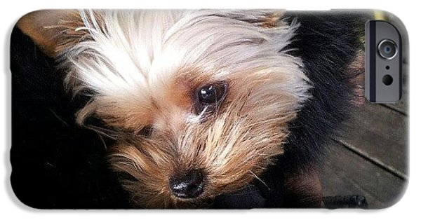 My #princess #dog #yorkie IPhone 6 Case