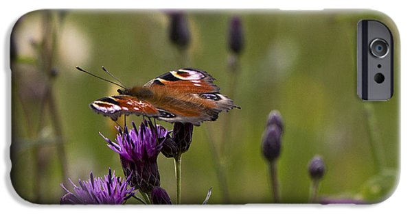 Peacock Butterfly On Knapweed IPhone 6 Case