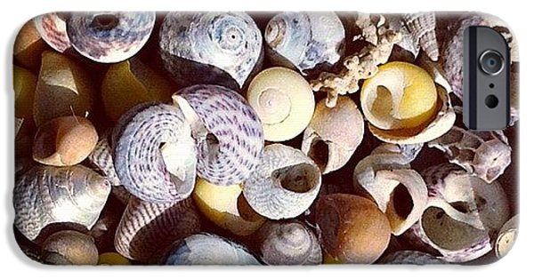 Shells From Brittany IPhone 6 Case
