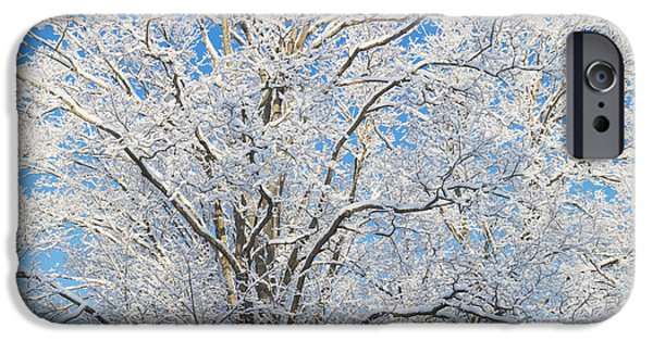 Wintertime iPhone Cases - Snow Covered Trees iPhone Case by Keith Webber Jr