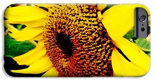 Summer iPhone 6 Case - #sunflower #flower #sun #yellow #green by Katie Williams
