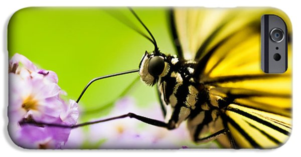 Bug iPhone Cases - Butterfly iPhone Case by Sebastian Musial