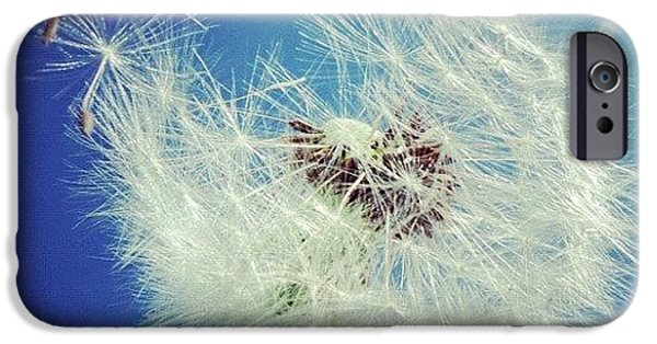 Sky iPhone 6 Case - Dandelion And Blue Sky by Matthias Hauser