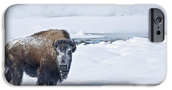 Lone Bison IPhone 6 Case by Gary Lengyel