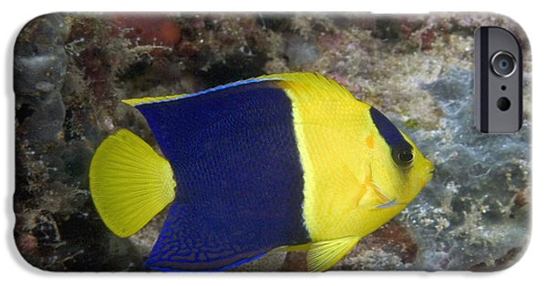 Angel Blues iPhone Cases - Malaysia Marine Life iPhone Case by Dave Fleetham - Printscapes