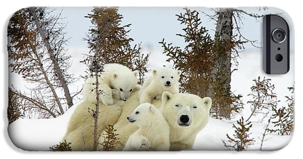 Fauna iPhone Cases - Polar Bear Ursus Maritimus Trio iPhone Case by Matthias Breiter