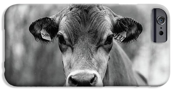 iPhone 6 Case - Portrait Of A Dairy Cow In The Rain Stowe Vermont by Edward Fielding
