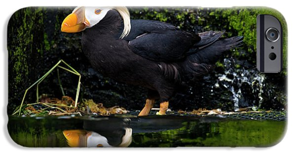 iphone 6 case puffin