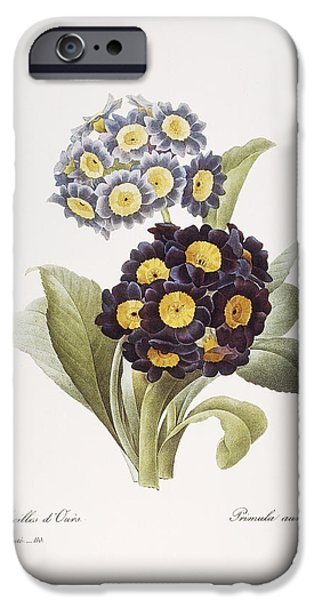 1833 Photographs iPhone Cases - Redoute: Auricula, 1833 iPhone Case by Granger
