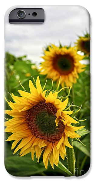 Flora iPhone Cases - Sunflower field iPhone Case by Elena Elisseeva