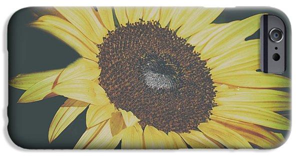 Sunflower Seeds iPhone 6 Case - Sunflower by Martin Newman
