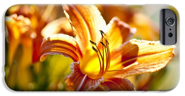 Stripes iPhone Cases - Tiger lily flower iPhone Case by Elena Elisseeva