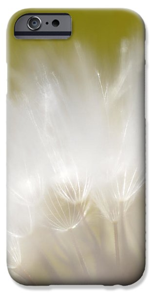 White Blossom 1 IPhone 6 Case by Dubi Roman