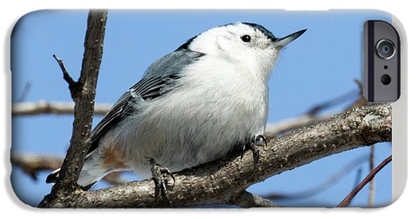 White-breasted Nuthatch IPhone 6 Case by Ricky L Jones