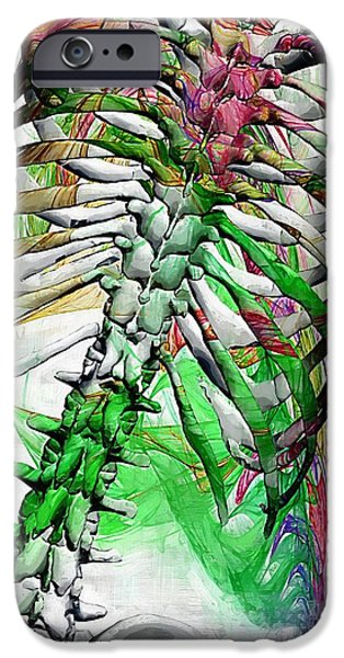 Disc iPhone Cases - Torso Skeleton iPhone Case by Joseph Ventura