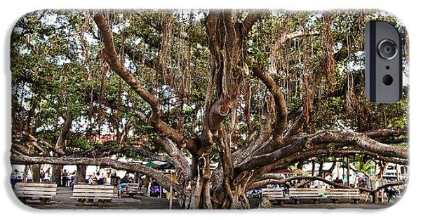 Pellegrin Photographs iPhone Cases - Banyan Tree iPhone Case by Scott Pellegrin