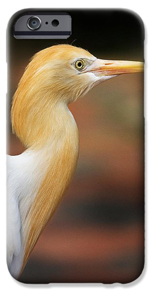 Cattle Egret iPhone Cases - Cattle Egret iPhone Case by Louise Heusinkveld