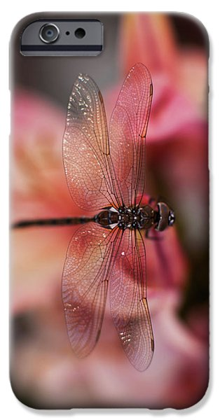Dragonfly iPhone Cases - Dragonfly Serenity iPhone Case by Mike Reid