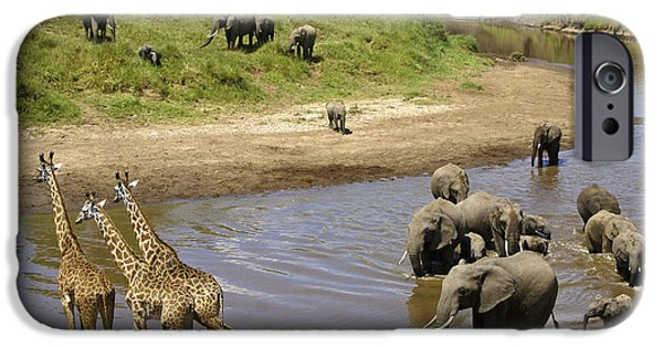 Elephant iPhone Cases - River Crossing iPhone Case by Michele Burgess