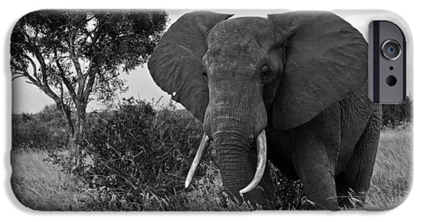 Elephant iPhone Cases - The Old Bull iPhone Case by Michele Burgess