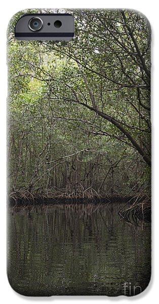 Rhizophora Mangle iPhone Cases - Red Mangrove Swamp, Florida iPhone Case by Scott Camazine