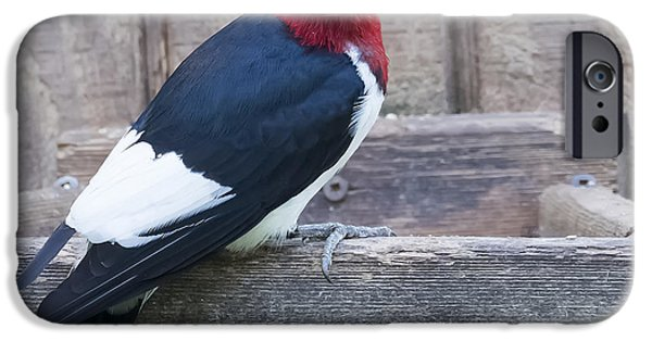 Red-headed Woodpecker IPhone 6 Case