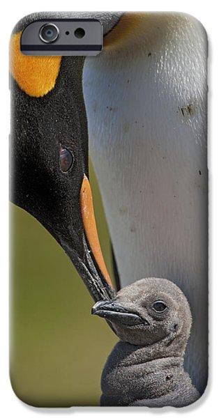 Baby Bird iPhone Cases - King Penguin Aptenodytes Patagonicus iPhone Case by Ingo Arndt