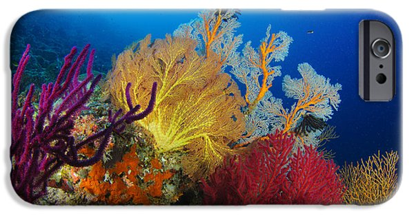 Undersea Photography iPhone Cases - A Diver Looks On At A Colorful Reef iPhone Case by Steve Jones