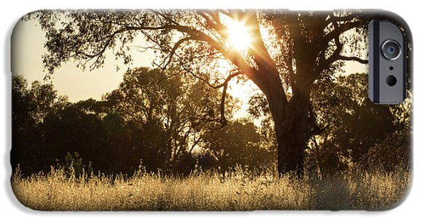 IPhone 6 Case featuring the photograph A Golden Afternoon by Linda Lees