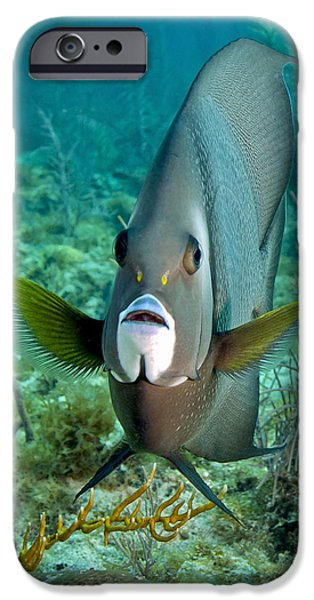 Undersea Photography iPhone Cases - A Gray Angelfish In The Shallow Waters iPhone Case by Michael Wood