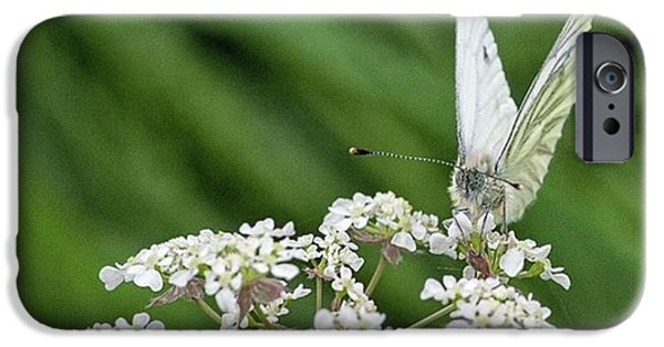 iPhone 6 Case - A Green-veined White (pieris Napi) by John Edwards