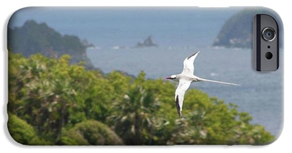 iPhone 6 Case - A Red-billed Tropicbird (phaethon by John Edwards