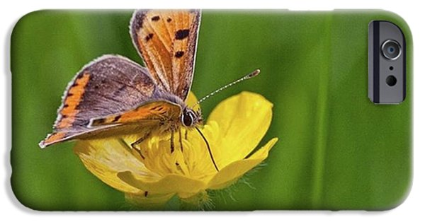 iPhone 6 Case - A Small Copper Butterfly (lycaena by John Edwards