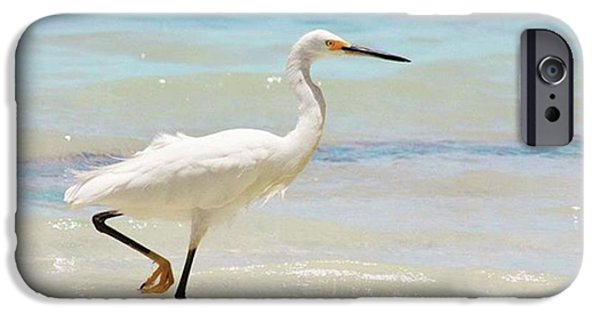 iPhone 6 Case - A Snowy Egret (egretta Thula) At Mahoe by John Edwards