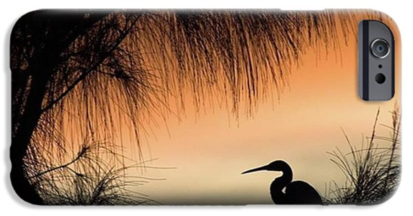 iPhone 6 Case - A Snowy Egret (egretta Thula) Settling by John Edwards