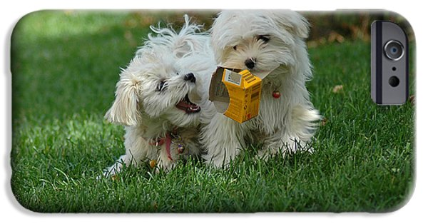 Maltese Puppy iPhone Cases - A True Kodak Moment iPhone Case by Lynn Bauer