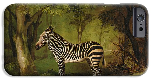 Jungle iPhone Cases - A Zebra iPhone Case by George Stubbs