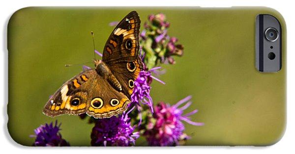Arkansas iPhone Cases - Admiral Butterfly  iPhone Case by Douglas Barnett
