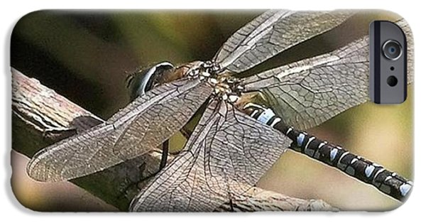 iPhone 6 Case - Aeshna Juncea - Common Hawker Taken At by John Edwards
