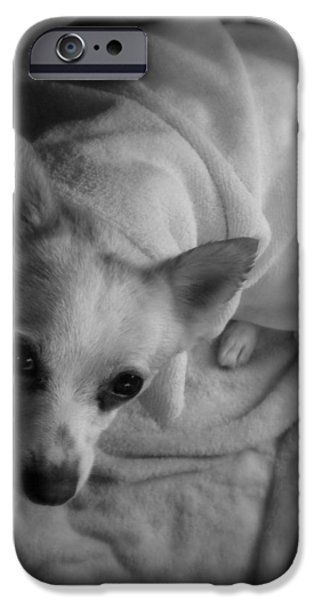 Jack Russell iPhone Cases - After the Beach iPhone Case by Mandy Shupp
