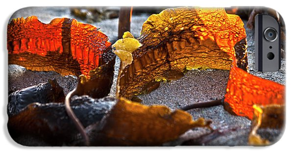 Tidal Photographs iPhone Cases - Algae at low tide iPhone Case by Heiko Koehrer-Wagner
