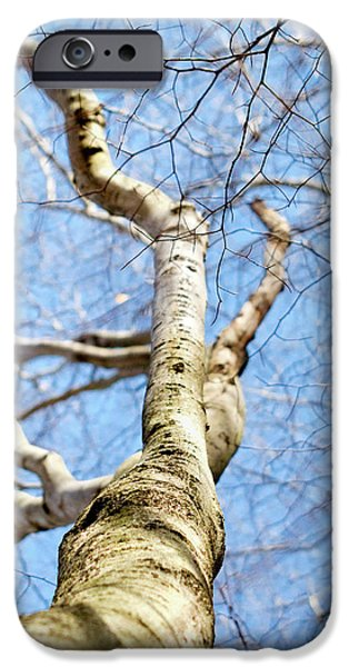 IPhone 6 Case featuring the photograph American Beech Tree by Christina Rollo