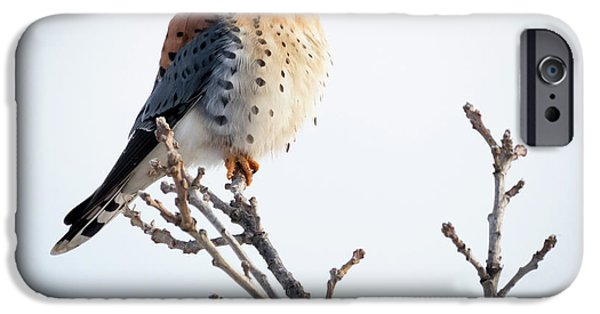 American Kestrel At Bender IPhone 6 Case